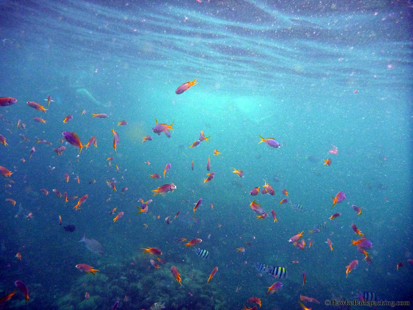 Ko Phi Phi - HawkeBackpacking.com