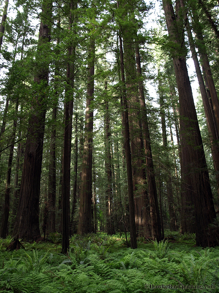 Avenue Near Me >> Redwood National Park - HawkeBackpacking.com