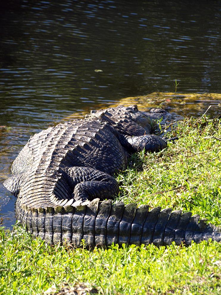Everglades National Park Shark Valley Hawkebackpacking Com